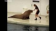 И моржовете могат да правят физически упражнения