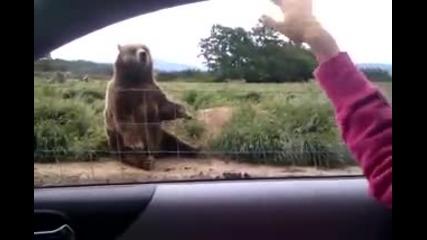 мечо махни с лапичка