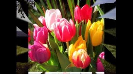 Баба Марта с ухание на пролетни цветя!