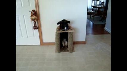 Най-умното куче