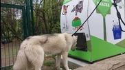 Кметът Николов и д-р Митев показаха как работи първия по рода си кучемат