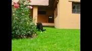 Един ден при черните пантери