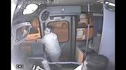 Ето как автобусен шофьор не прощава на дързък крадец !
