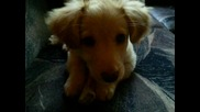 Моето кученце