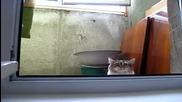 Котка шпионин (луд смях)