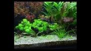 Аквариумни растения