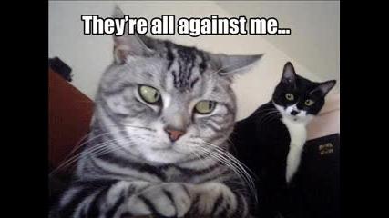 Смешни Котенца