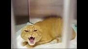 Много ядосана котка ! ( смях )