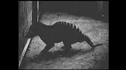 1933 Paranormal Tiger With Dog