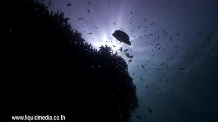 Живот Под Водата!