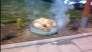 Куче тарикат :d