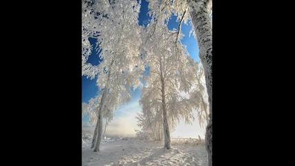 зимни снимки