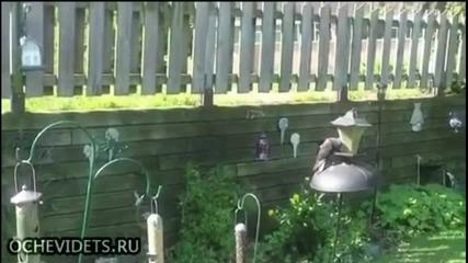 Нахална катерица