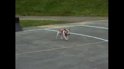 Куче  Шампион