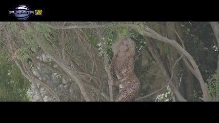 ♫♫ ♫ ♫ Цветелина Янева и Ищар - Музика в мен ♫♫ ♫ ♫ 2015
