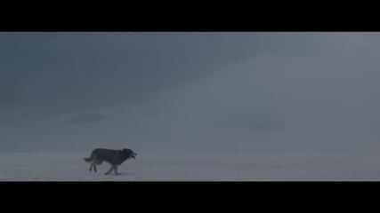 David Guetta - She Wolf (falling To Pieces) ft. Sia Кампания да спрем чалгата!