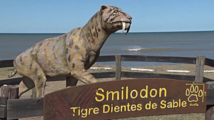 Argentina: Remains of prehistoric megafauna found in Mar Chiquita