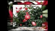 Рози и валс