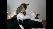 Котка масажист - смях