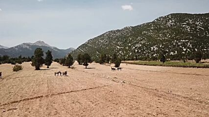 Turkey: Eynif Plain yilki wild horses in danger as wildfires spread along country's south