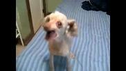 Пеещото куче, което стана в Youtube !