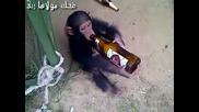 Тази маймунка яко се напи (смях )