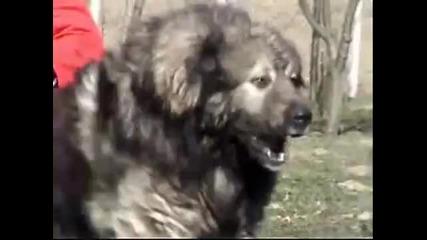 Голямо куче! (снимки+видео)