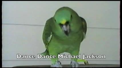 Папагалчета говорят и танцуват на песен на Michael Jackson
