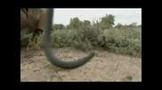 Десетте Най - Отровни Змии(част 2 - Ра)