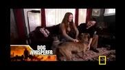 Питбул-убиец в Говорещия с кучета