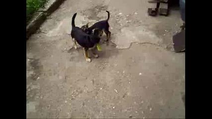 Ожесточена борба между зверове :d