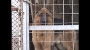 Нараства търсенето на хотели за домашни любимци, където хората остават кучетата си по празниците