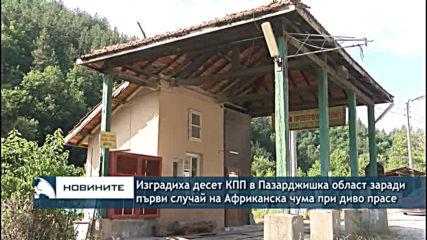 Изградиха десет КПП в Пазарджишка област заради първи случай на Африканска чума при диво прасе