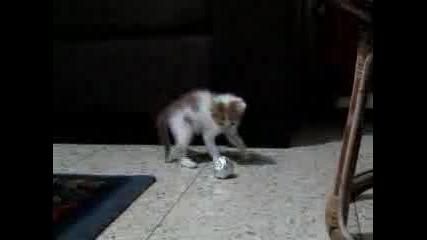 Моето Сладко Коте