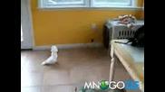 Папагал Напада Доберман