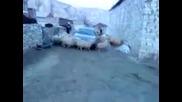 Овчи циклон