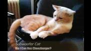 baasssss (котка върху говорител)