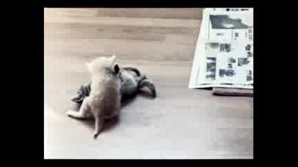 Котки се бият - с звуците от cs