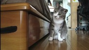 Котката нинджа 2