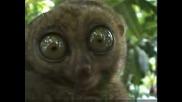 най - странното животно в света
