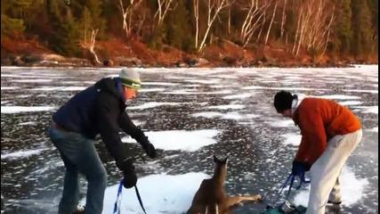 Смели мъже спасяват сърничка от замръзнала река!