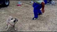 крушуна мопс краде кокал