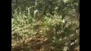 Жесток Trailer - (downhill, Dirt Jumps & Drift)
