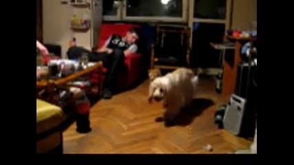 Котка оправя куче!!! Който може си го може!!!