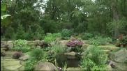 Гармония воды и сада