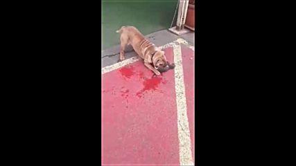 Зверство в Слънчев бряг - куче убива котка насъскано от стопанката си
