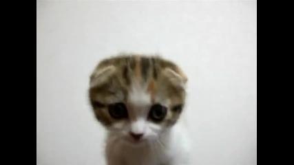 Най-сладкото и красиво коте на света