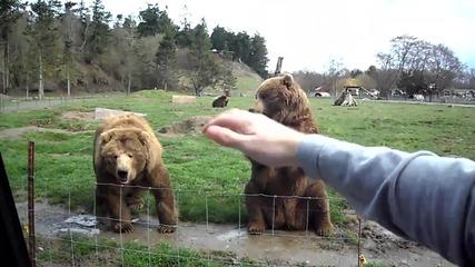 Сладки мечки махат за здрасти !