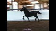 Horses  !!!Elsje!