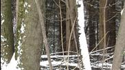 На дълбоко в гората с мега зуум